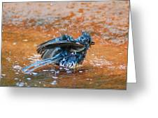 Tufted Titmouse Bath Greeting Card