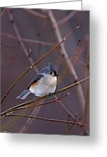 Tufted Titmouse In Winter Greeting Card