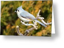 Tufted Titmouse On A Branch Greeting Card