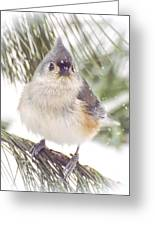 Tufted Titmouse Snow Face Greeting Card