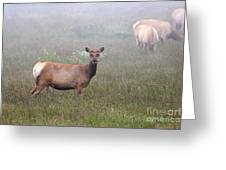 Tule Elk In Fog Greeting Card