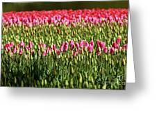 Tulip-1 Greeting Card