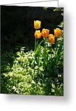 Tulip #1 Greeting Card