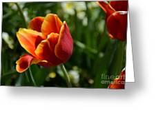 Tulip 11 Greeting Card