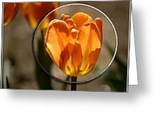 Tulip 1b Greeting Card