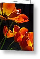Tulip 38 Greeting Card