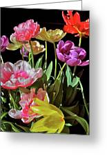 Tulip 8 Greeting Card