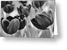 Tulip 84 Greeting Card