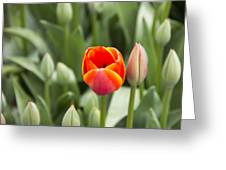 Tulip And Child Greeting Card