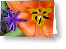 Tulip And Company Greeting Card