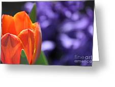 Tulip And Hyacinth Greeting Card