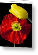 Tulip And Iceland Poppy Greeting Card by Garry Gay
