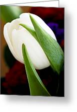 Tulip Arrangement 4 Greeting Card