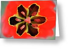 Tulip At Amatzia Forest - 4 Greeting Card
