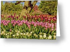 Tulip Bed At Longwood Gardens In Pa Greeting Card