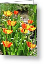 Tulip Bouquet Greeting Card