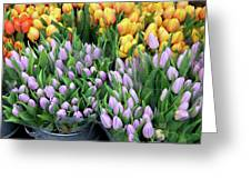 Tulip Bouquets For Sale Greeting Card