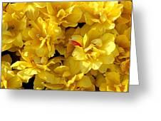 Tulip Bunching Greeting Card