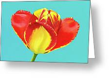 Tulip Burst Greeting Card