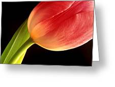 Tulip Close-up Greeting Card