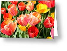 Tulip Crossing Greeting Card