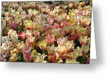 Tulip Delight 3 Greeting Card