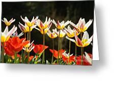 Tulip Field 11 Greeting Card