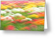 Tulip Field Abstract - Holland Michigan Greeting Card