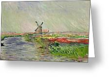 Tulip Field In Holland Greeting Card