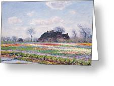 Tulip Fields At Sassenheim Greeting Card
