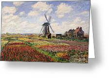 Tulip Fields With The Rijnsburg Windmill Greeting Card