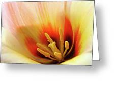 Tulip Flower Artwork 31  Tulips Flowers Macro Spring Floral Art Prints Greeting Card