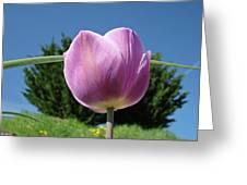 Tulip Flower Landscape Art Print Purple Tulips Baslee Greeting Card