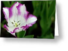 Tulip Flower Greeting Card by Pradeep Raja Prints