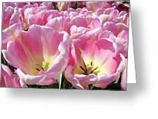 Tulip Flowers Garden Art Pink Tulips Baslee Troutman Greeting Card