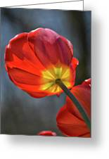 Tulip From Below Greeting Card
