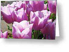 Tulip Garden Flowers Purple Lavender Pastel Art Baslee Troutman Greeting Card