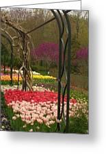 Tulip Garden  Greeting Card