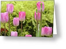 Tulip Garden Landscape Art Prints Pink Tulips Floral Baslee Troutman Greeting Card