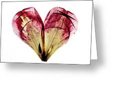 Tulip Heart Greeting Card
