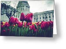 Tulip In Bloom Greeting Card