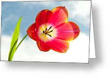 Tulip In The Sky Greeting Card