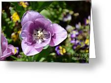Tulip Lavender Greeting Card