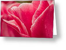Tulip Layers Greeting Card
