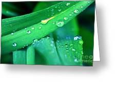 Tulip Leaf Droplets-2 Greeting Card