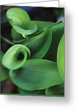 Tulip Leaves Greeting Card