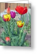 Tulip Mixture Greeting Card