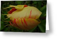 Tulip Or Sea Creature Greeting Card