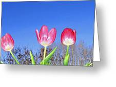 Tulip Panorama Greeting Card