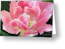 Tulip Peppermint Pink Greeting Card